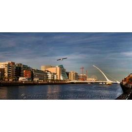 Dublin Gull Skyline