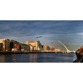 Dublin Gull Skyline