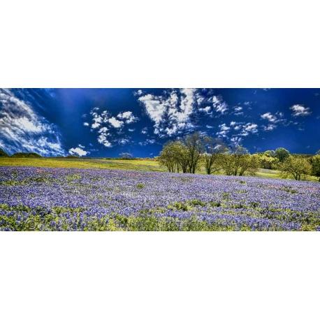Texas Landscape 8
