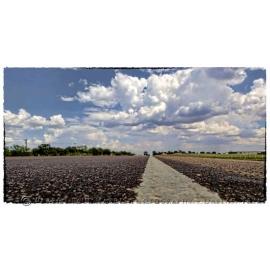 Texas Landscape 13