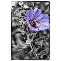 Althea Bumblebee Selective Color
