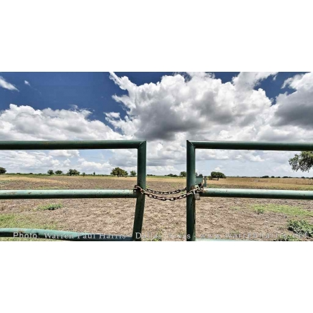 Green Fence Landscape